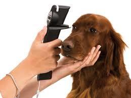 Tonómetro: Medidor de Presión Intraocular Veterinario Tonovet & Tonovet Plus