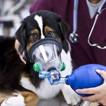 Máscaras de Oxígeno Veterinarias