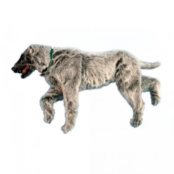 Simulador de posicionamiento Canino