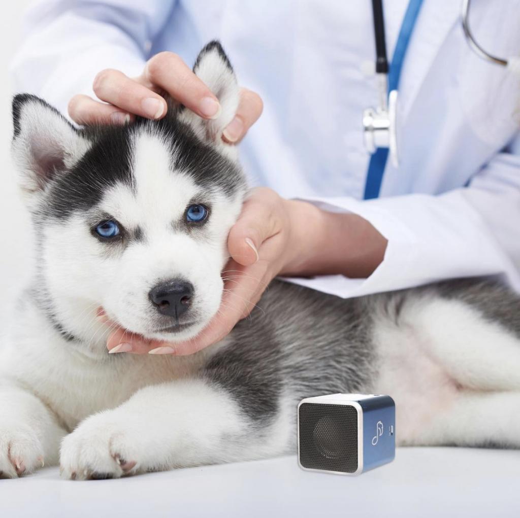 Pet Tunes Canino