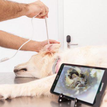 Otoscopio Digital Veterinario ekuore